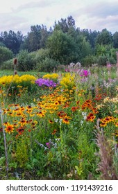 Beautiful landscape with bright blooming summer flowers. Latvia, East Europe. Blooming Sally and Rudbeckia or Black-Eyed Rudbeckia.