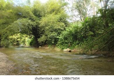 Beautiful landscape with calm flowing river inside the tropical rainforest Henri Pittier National Park, Venezuela