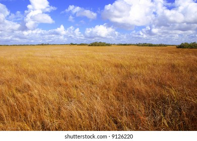 Beautiful landscape covered with golden summer grass.