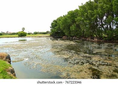 Beautiful landscape. Cute bird standing in water. Green trees. Aruba island nature.