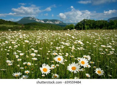 Beautiful landscape with daisy flowers and mountain on the background