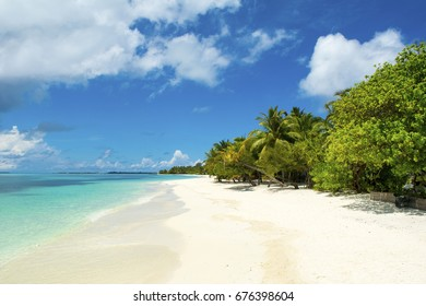 The beautiful landscape of the deserted Indian Ocean sandy beach, shaded by palm trees and tropical plants