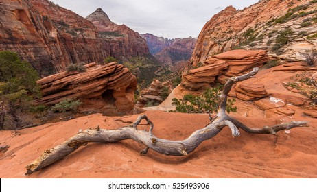 Beautiful landscape. Dry trees on rock slopes. Scenic view of the canyon. Zion National Park, Utah, USA