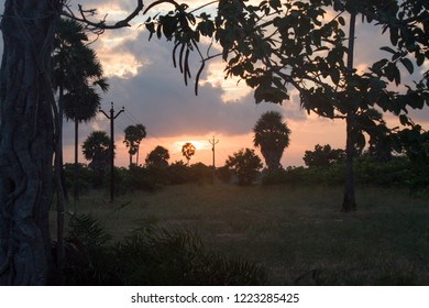 Beautiful landscape during sunrise on the Jungle with Trees Silhouette, the Colorful Cloudy sky - Dusk To Dawn at Kattupalli Jungel, Ennore Tamil Nadu in Inda