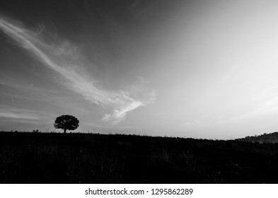 Beautiful landscape in the early morning mist  in black and white