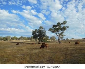Beautiful landscape in Eden Valley, South Australia.