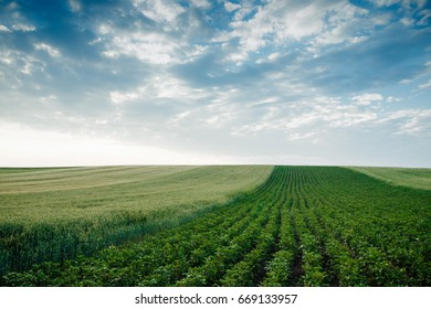 Beautiful landscape of the field