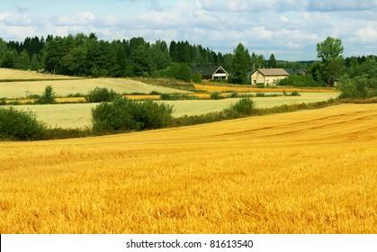 Beautiful landscape - field, farm and sky
