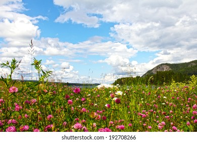 Beautiful landscape with fjord and summer flowers in Norway
