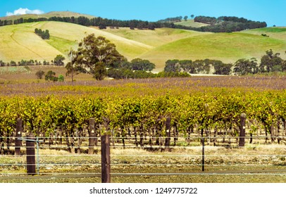a beautiful landscape with flowing vineyards