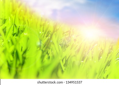 Beautiful landscape, fresh green field, blue sky, sunny day, warm weather, spring nature, environment concept