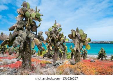 Beautiful landscape of Galapagos South Plaza island