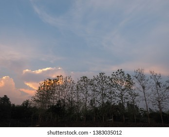 beautiful landscape of golden and blue clouds on sky and tree silhouetted for wallpaper or background