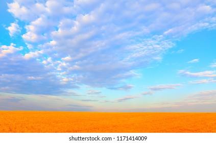 Beautiful landscape of golden dry wheat field