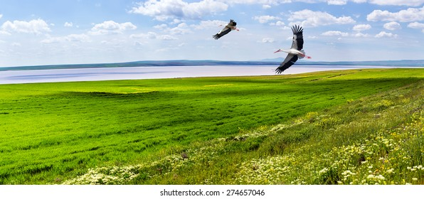 Beautiful landscape with a green field, Pink Lake storks in the sky against a majestic sky