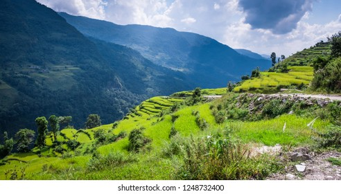 Beautiful landscape with green field of rice and mountains in nepal