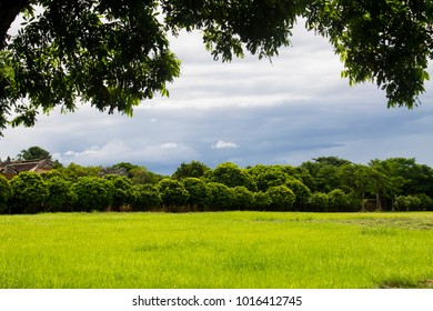 Beautiful landscape of a green field with trees and stormy sky in Hue, Vietnam