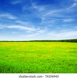Beautiful landscape. Green grass and blue sky.