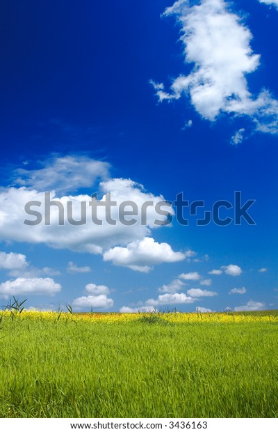 Beautiful landscape - green grass - great blue sky with fluffy clouds