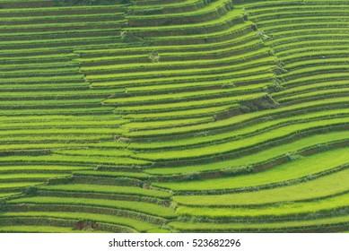 Beautiful landscape Green Terraced Rice Field in Mu cang chai, Vietnam