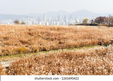 Beautiful landscape in Haneul Park in Seoul