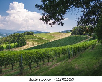 Beautiful landscape of the hills of Oltrepo Pavese, in Italy.