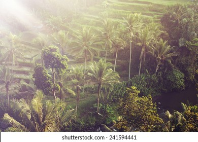 Beautiful landscape of humid tropical jungle. Bali, Ubud, Indonesia.