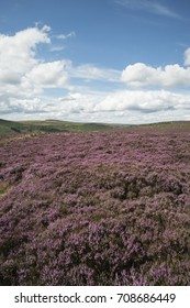 Beautiful landscape image of Burbage Edge and Rocks in Summer in Peak District England