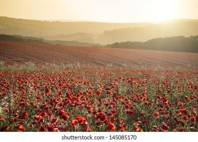 Beautiful landscape image of Summer poppy field under stunning sunset sky
