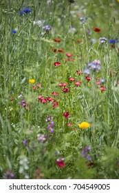 Beautiful landscape image of wildflower meadow in Summer