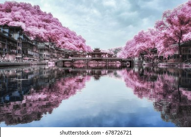 Beautiful  Landscape Infrared Photography