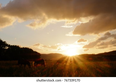 Beautiful landscape with isolated horse in the foreground amazing nature green field blue sky