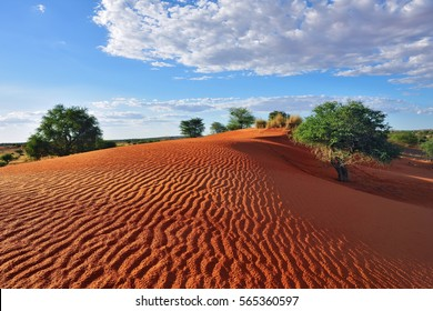 Beautiful landscape in Kalahari. Big red dune with sand waves under bright sunset light painted in vivid colours, dramatic cloudy sky abobe