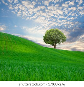 beautiful landscape and lone tree
