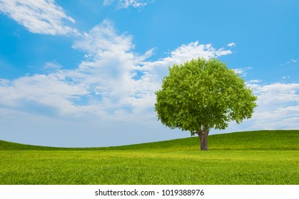 Beautiful landscape with lone tree stands in a green field.