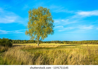 Beautiful landscape with a lonely birch tree in the field on a Sunny autumn day.