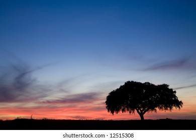Beautiful Landscape with Lonely tree at sunset - Alentejo, Portugal