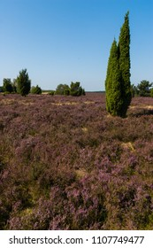 Beautiful landscape in the Lueneburg Heath in portrait format