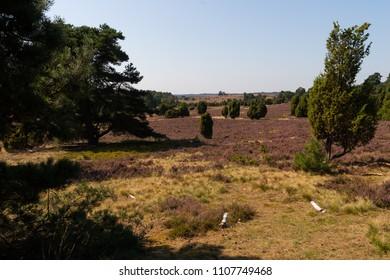 Beautiful landscape in the Lueneburg Heath in wide angle