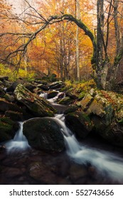 Beautiful landscape with magic autumn river in forest, Asia landscape, best travel, (harmony, relaxation - concept) - Fantasy ambientation - colored filter