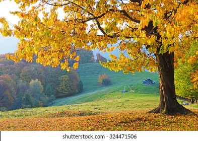 Beautiful Landscape With Magic Autumn Trees And Fallen Leaves In The Mountains Harmony Relaxation