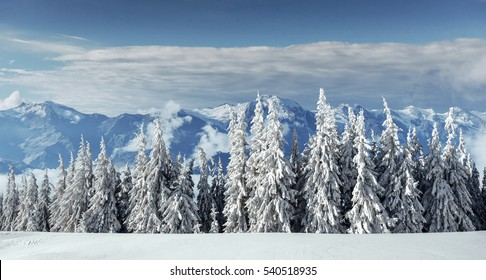 Beautiful landscape of majestic mountains in winter. Magical snow covered trees. Carpathian Ukraine. Happy New Year.