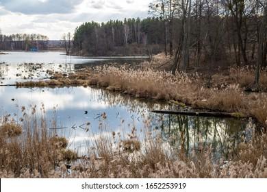 The beautiful landscape of marshland