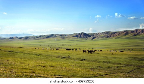 Beautiful landscape with meadows and cows in the Caucasus mountains. Georgia