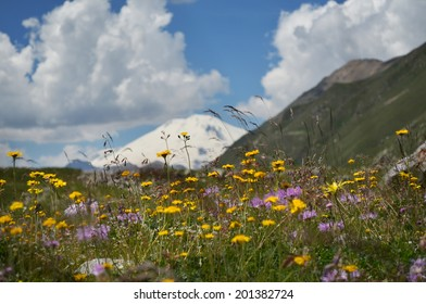 Beautiful landscape with mountain flowers