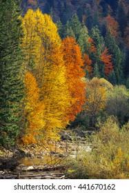 beautiful Landscape, mountain stream in autumn forest