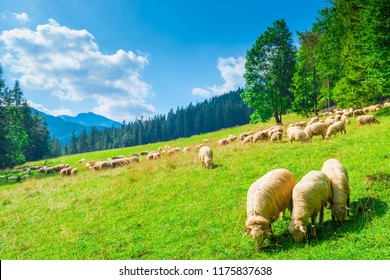 beautiful landscape mountainside slope and flock of sheep on a meadow on a sunny day