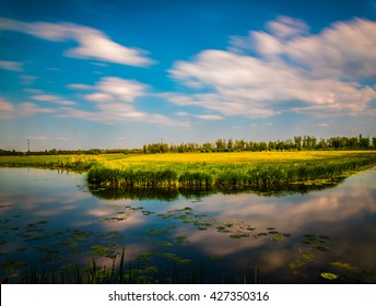 Beautiful landscape National park Biesbosch in the Netherlands