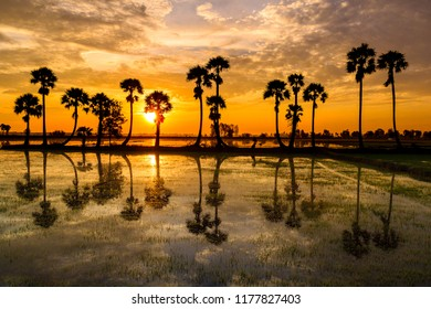 Beautiful landscape of nature with dramatic cloudscape, row of palm trees in silhouette reflect on surface water of river at sunrise