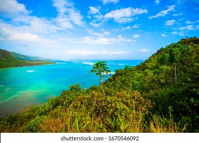Beautiful Landscape in Oahu, Hawaii